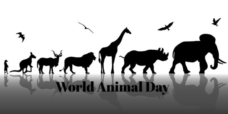 Puerto Vallarta celebrates Animal Week
